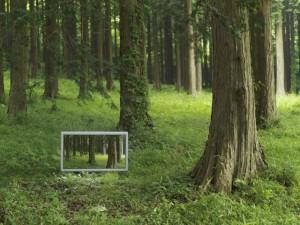 Flachbildschirm im Wald